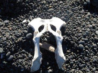 a place to bang bones