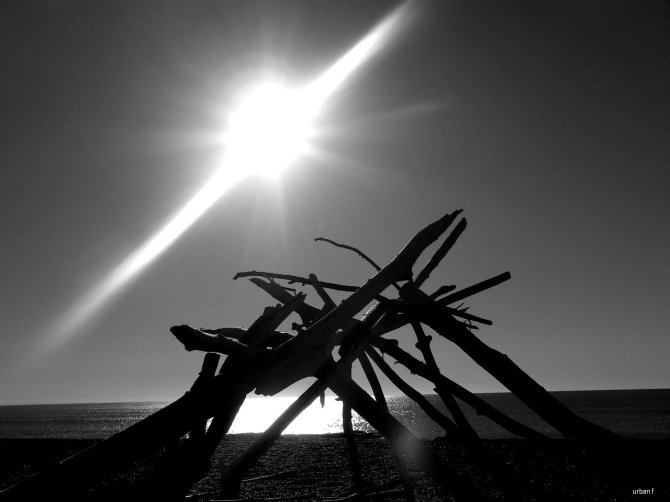 driftwood sculpture bw